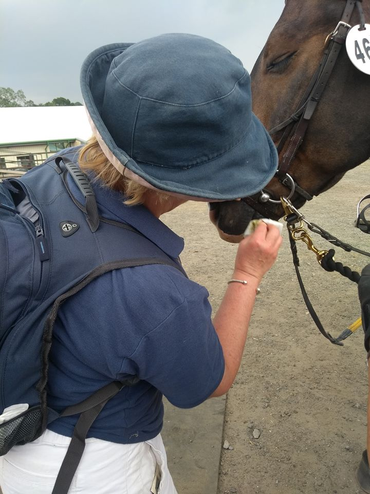 a person cleaning a horse's mouth