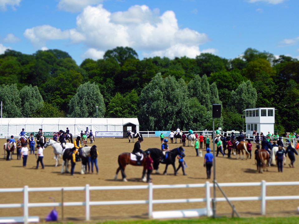 horses in an arena